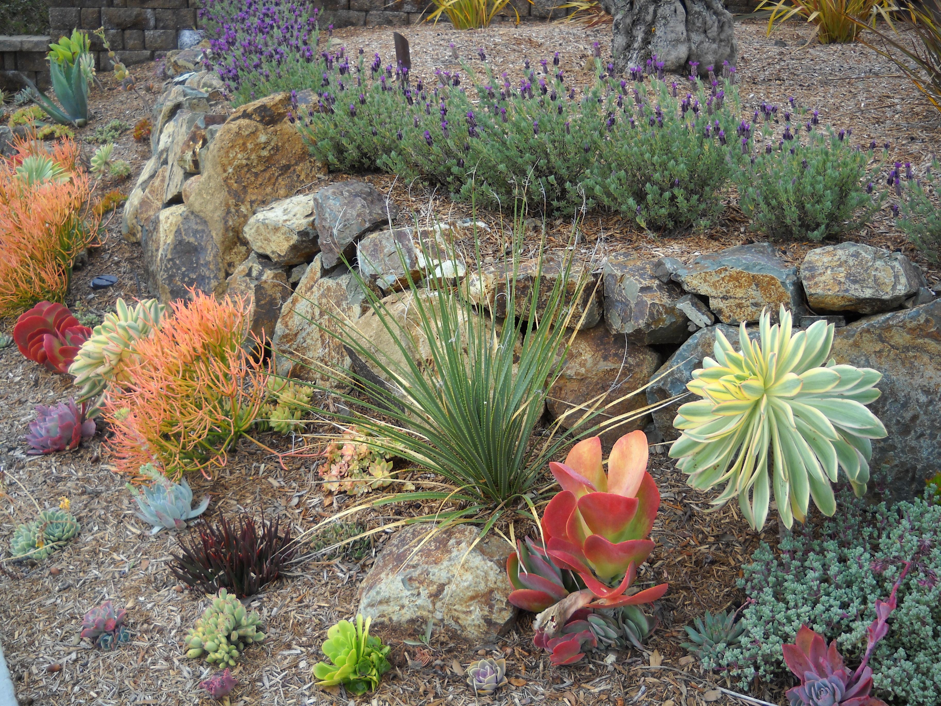 succulent garden docdavesvoice